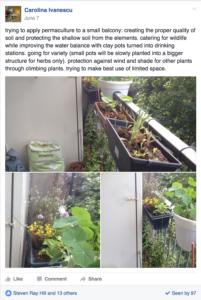 Balcony plantings